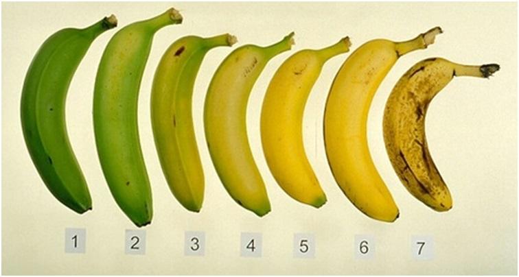 quel est le meilleur moment pour manger une banane family sant. Black Bedroom Furniture Sets. Home Design Ideas
